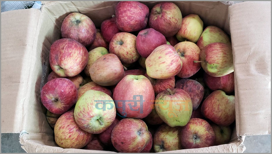 Jumlas-Apple-3